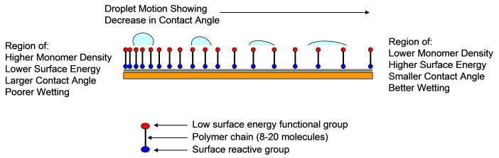 Figure 1.  The physics of droplet motion on a chemically induced surface gradient is illustrated.  A constant supply of liquid droplets is supplied uniformly by condensation on the gradient surface.  The droplets move towards the more hydrophilic region of the gradient surface due to the difference in contact angle experienced by opposing sides of the droplets.